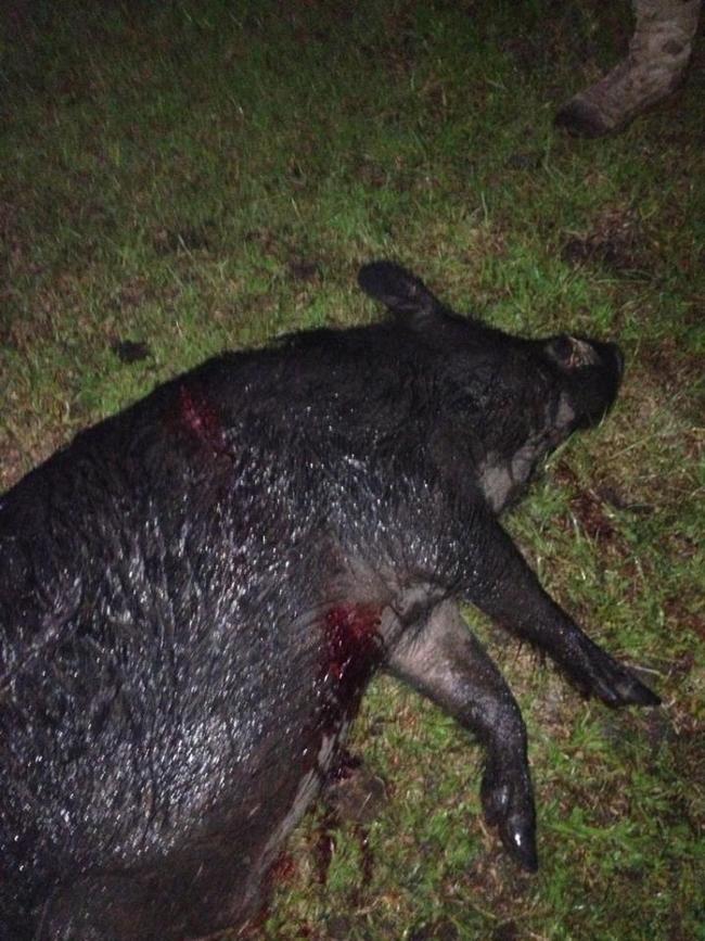 monster pig-img958968.jpg
