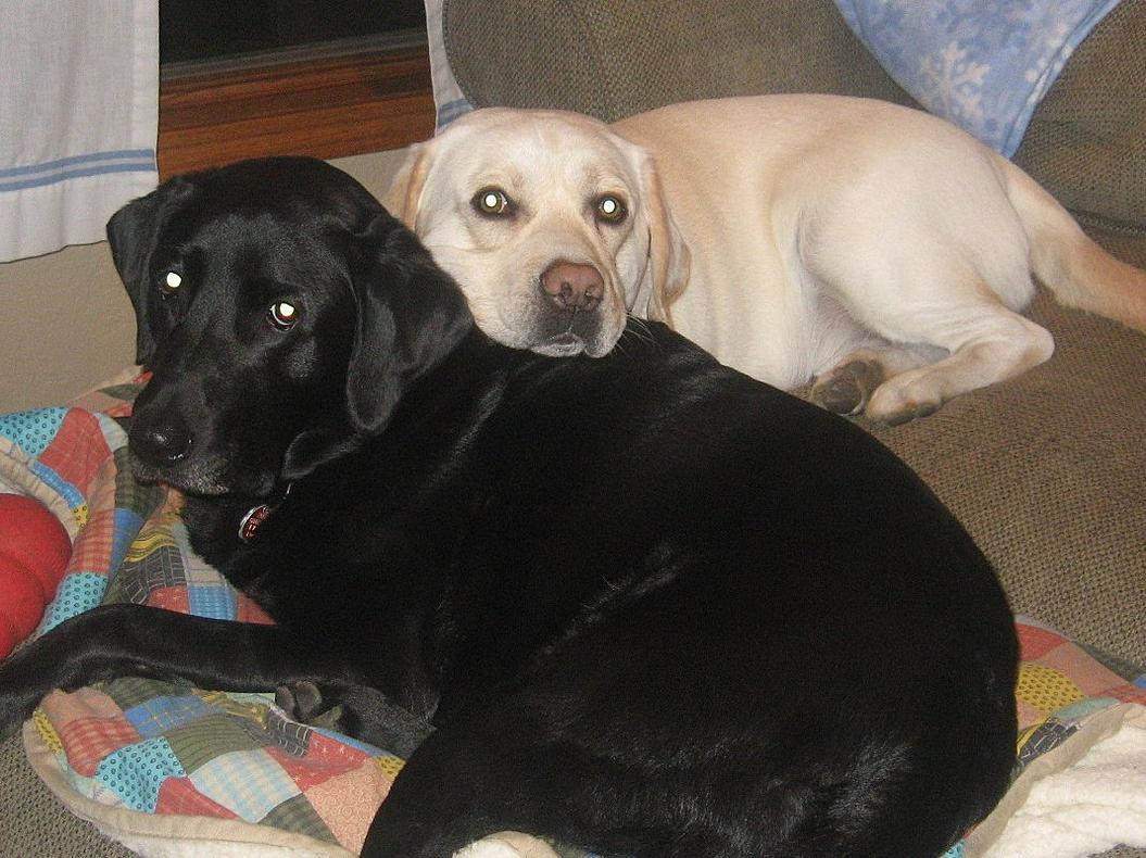 Picture of Raven and Gunnar-img_0623.jpg