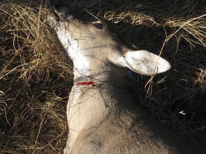 Deer shot-img_2365.jpg