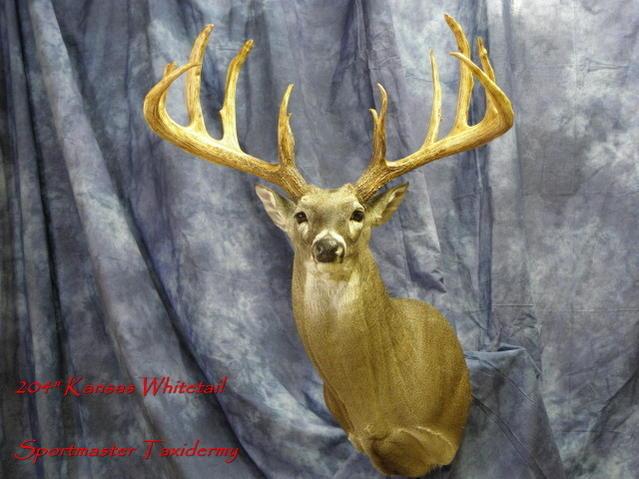 Professional Deer Taxidermy-kansas-deer.jpg