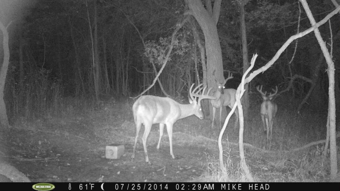 More pics-kentucky-bucks-2013.jpg