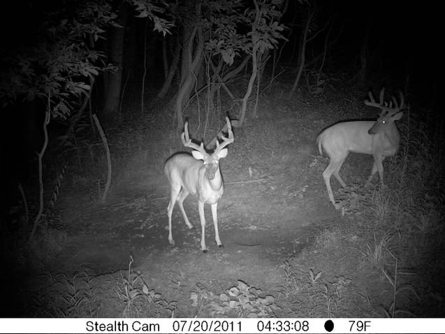 More pics-kentucky-deer-season.jpg
