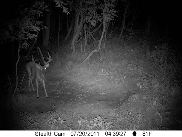 Kentucky trail cam-ky-deer-11.jpg