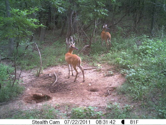 Kentucky trail cam-ky-deer-2011.jpg