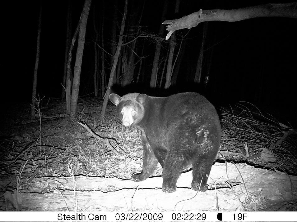 Black Bear country-land-022.jpg