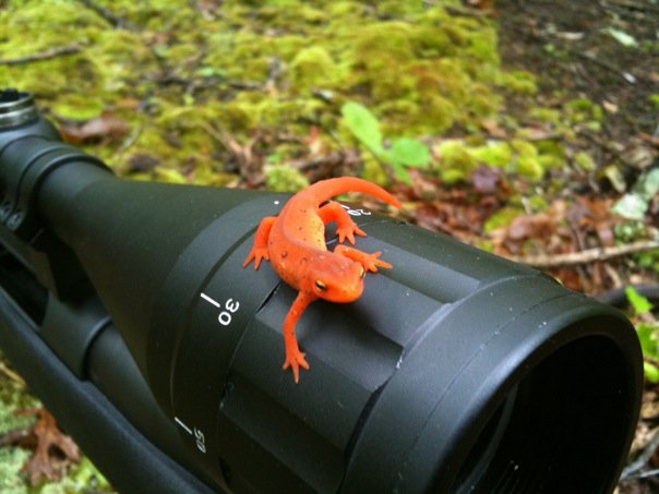 cool picture...-lizard-my-scope.jpg
