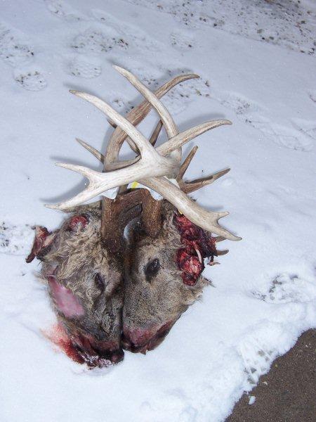 Iowa gun season starts this weekend post pictures here.-locked-deer.jpg