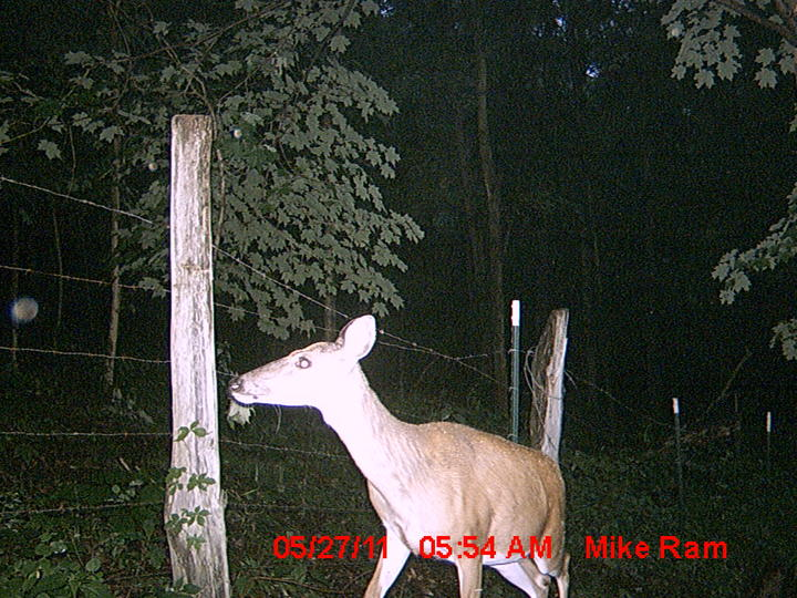 Summer Cam Pictures-mdgc0007.jpg