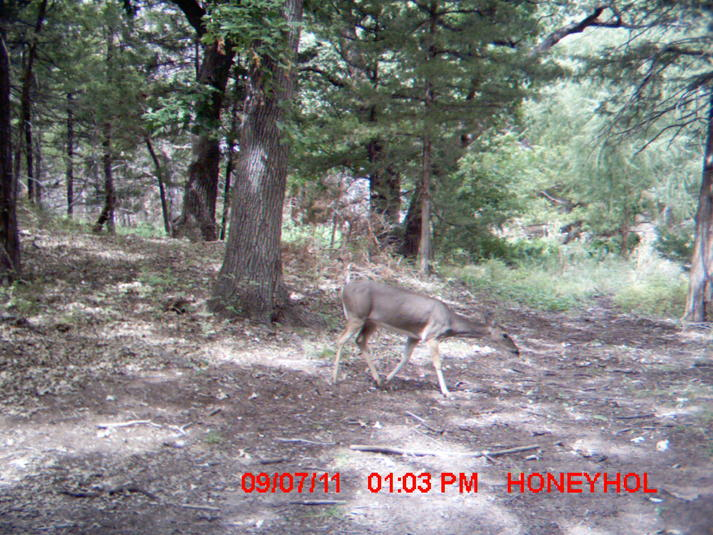 Finally found my trail cams...-mdgc0023.jpg