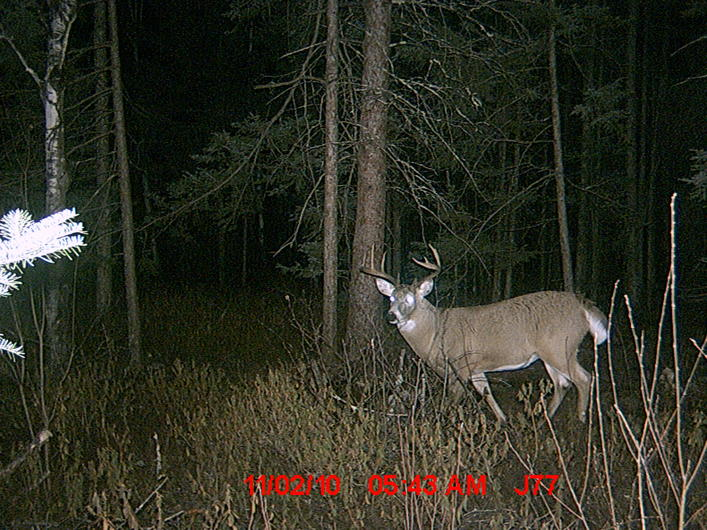 2010 Deer From Canada-mdgc0039.jpg