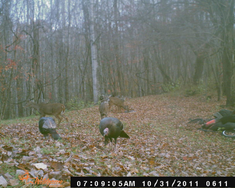Official Thread 2011 Trail Cam Pic Contest ( cash)-oct-2011-nc-deer-606.jpg