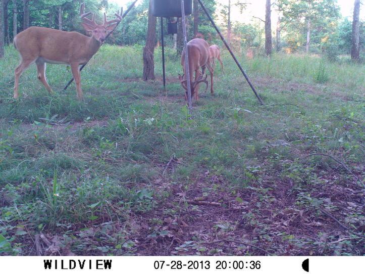 Ohio buck-ohio-buck.jpg