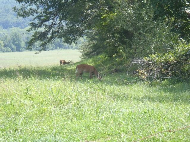 Cades Cove TN Bucks-p8080023-640x480-.jpg