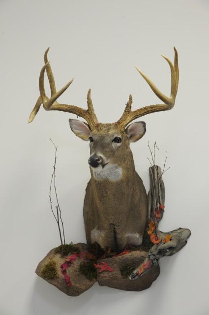 Professional Deer Taxidermy-parker-deer.jpg