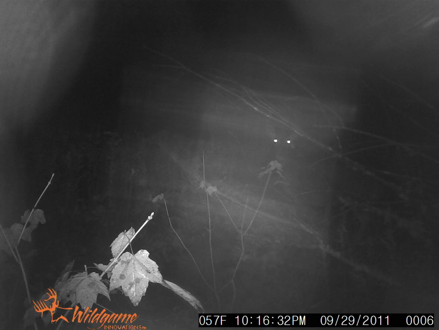 Anyone wanna take a guess-pats-trail-cam-pics-rumney-apple-orchard-006.jpg