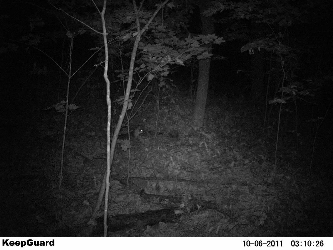 Official Thread 2011 Trail Cam Pic Contest ( cash)-pict0006.jpg