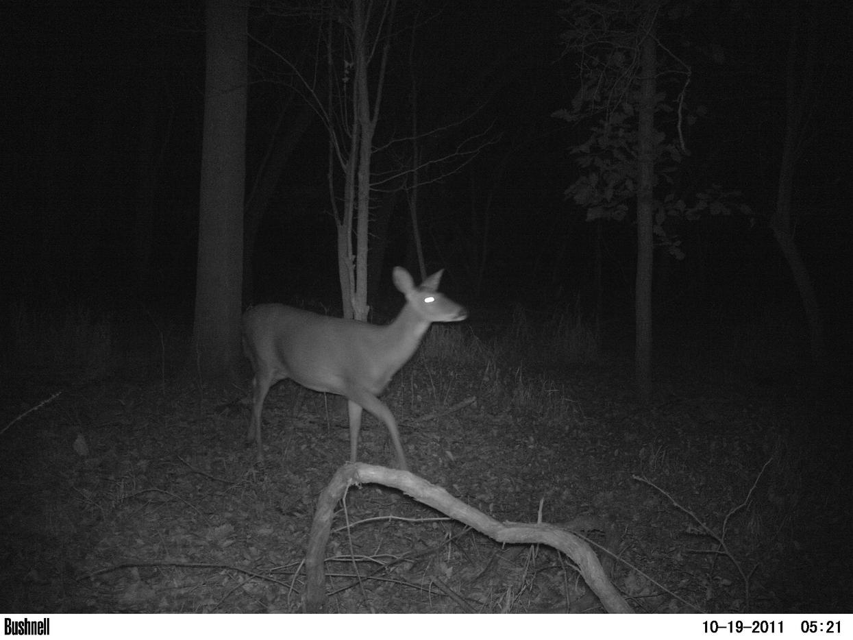Game camera and spooking deer-pict0013.jpg