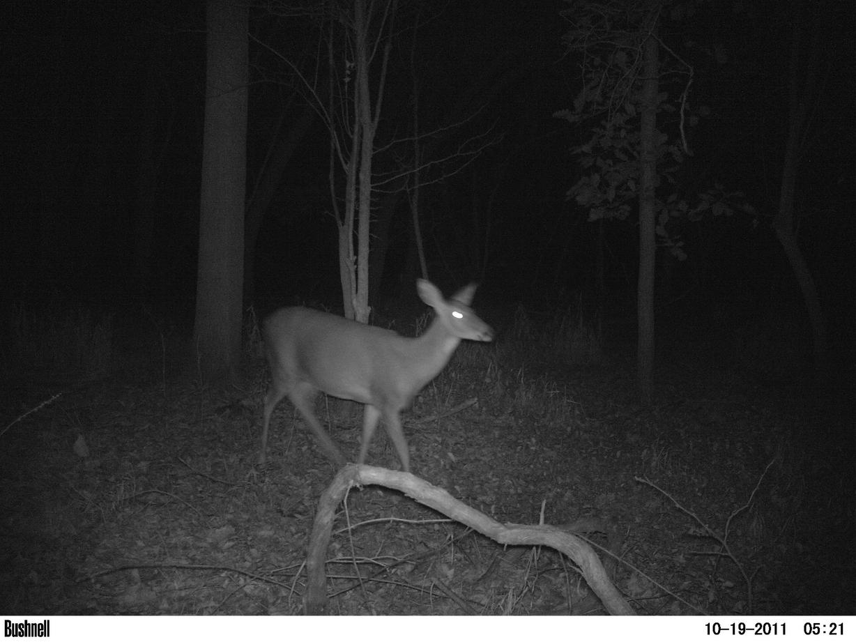 Game camera and spooking deer-pict0014.jpg