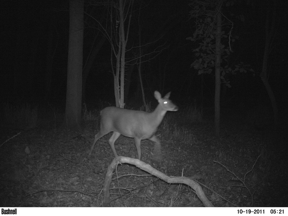 Game camera and spooking deer-pict0015.jpg