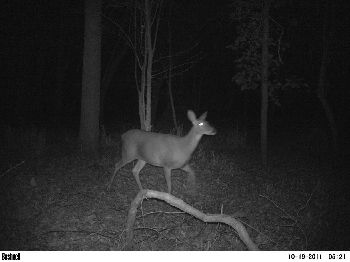 Game camera and spooking deer-pict0015.jpg