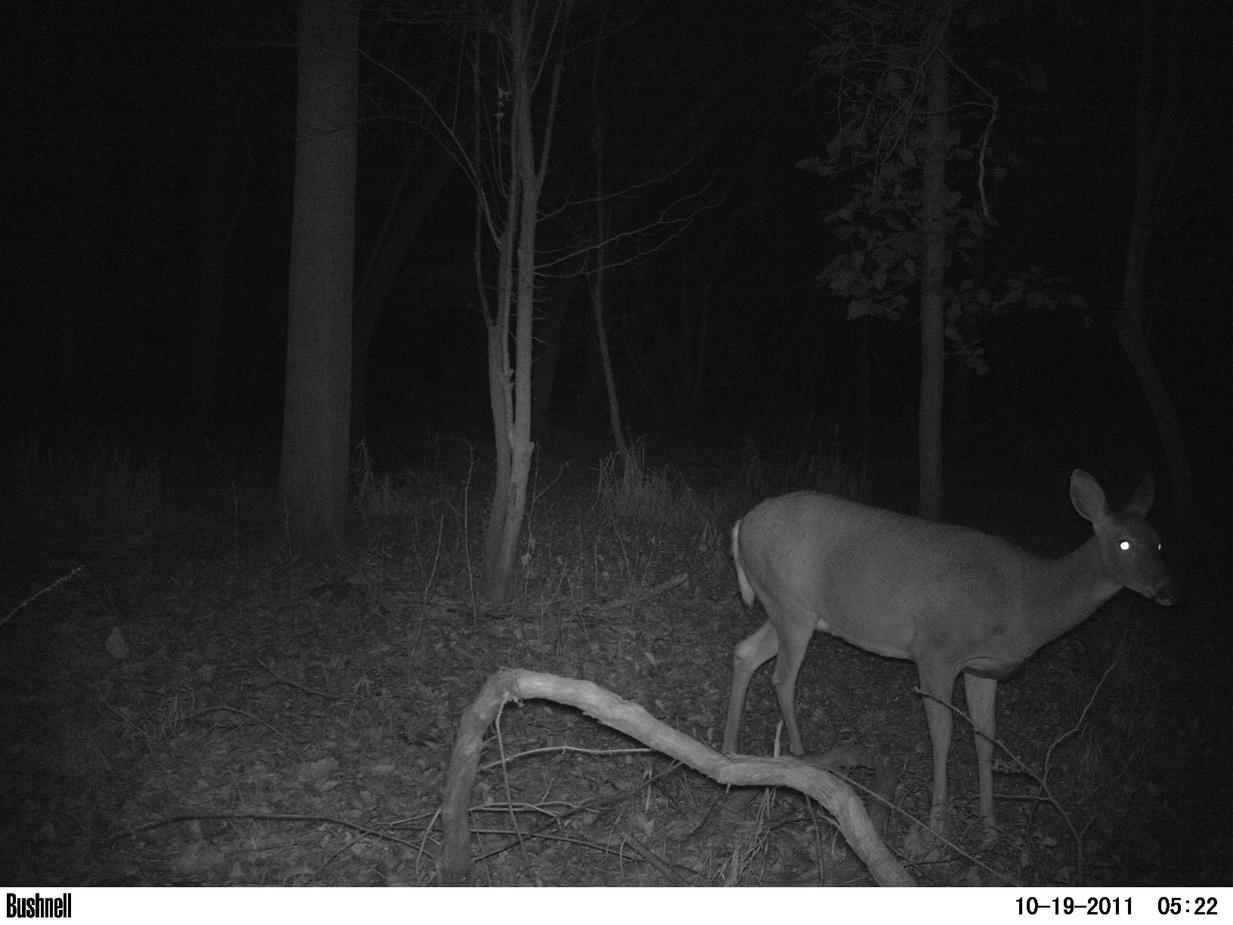 Game camera and spooking deer-pict0016.jpg