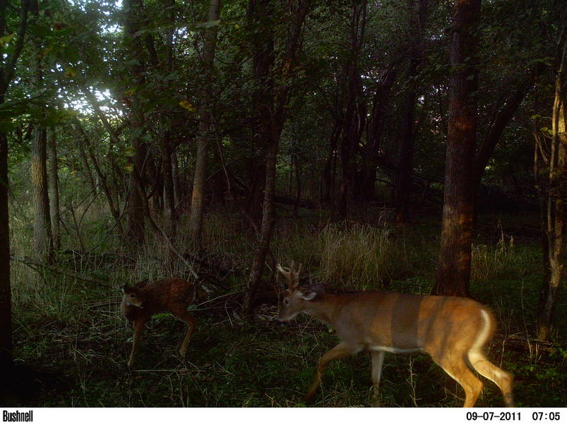 Official Thread 2011 Trail Cam Pic Contest ( cash)-pict0026.jpg