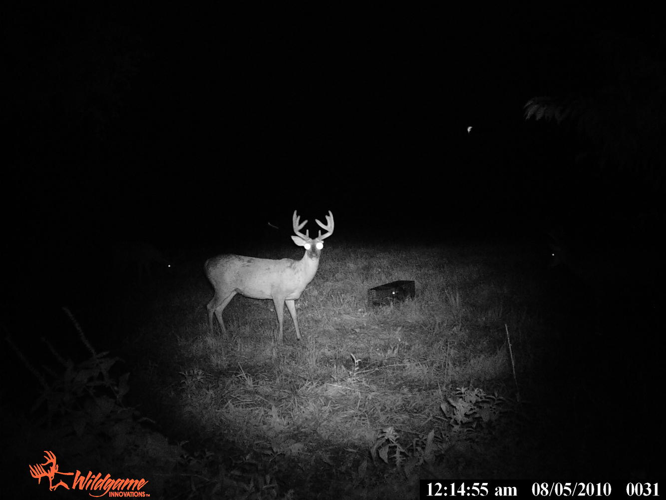 Can U guess what's wrong w/this buck?-pict0031.jpg