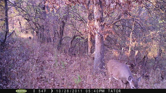 Moultrie Digital Picture Viewer-pict0031.jpg