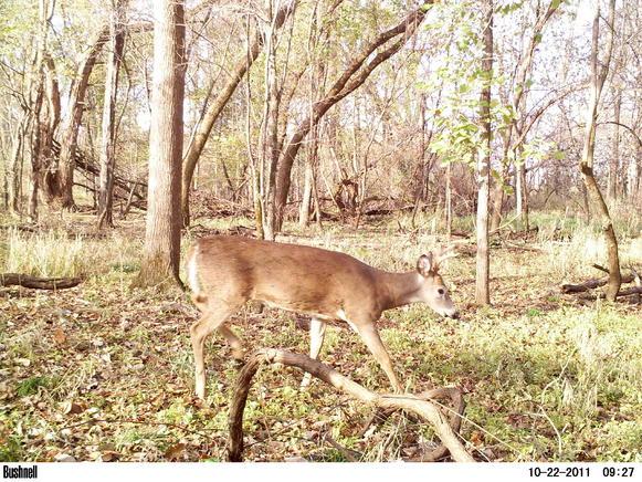 Game camera and spooking deer-pict0032.jpg