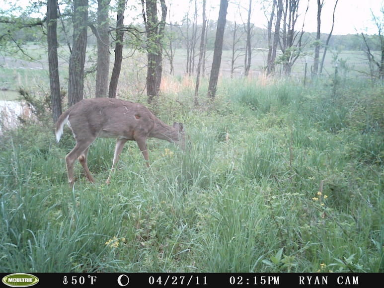 Bucks in Velvet...-pict0038.jpg