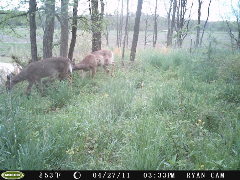 Bucks in Velvet...-pict0039.jpg