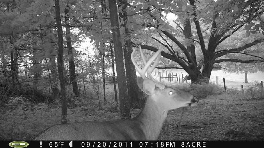 Couple of pics from game cam-pict0049.jpg