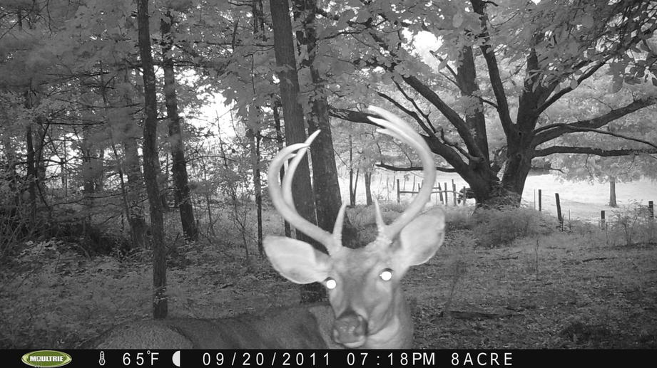 Couple of pics from game cam-pict0050.jpg