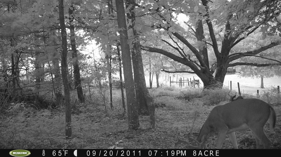 Couple of pics from game cam-pict0054.jpg