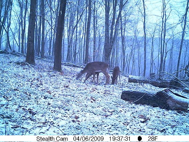Black Bear country-pict0069.jpg