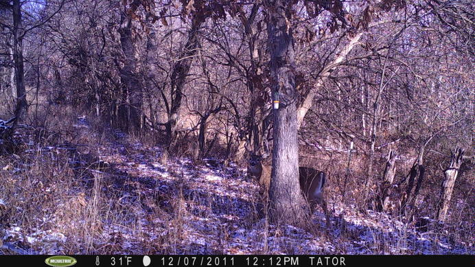 Recommended trail cameras on sale!!!-pict0073.jpg