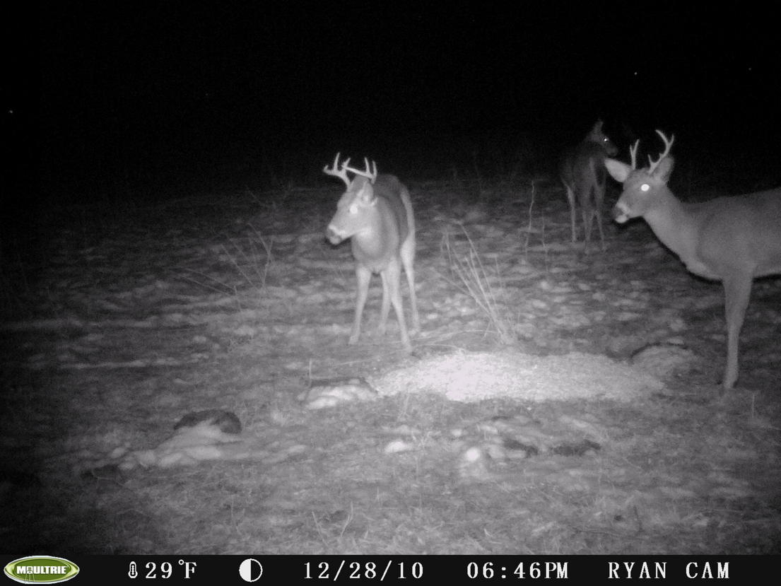 Post-Season Buck Pics....-pict0131.jpg