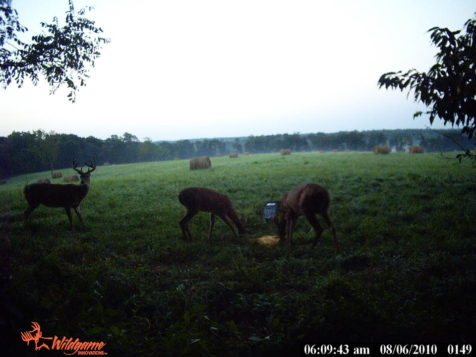 Nice bucks!!!-pict0149.jpg