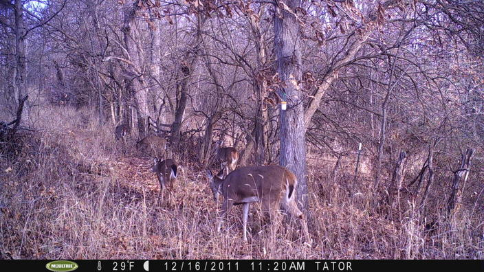 Recommended trail cameras on sale!!!-pict0154.jpg