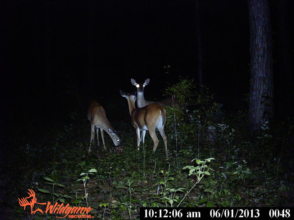 trail cam pics from Ga-pict0211.jpg
