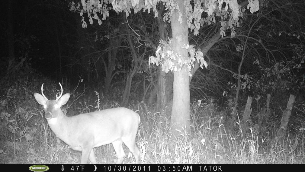 Moultrie Digital Picture Viewer-pict0223.jpg