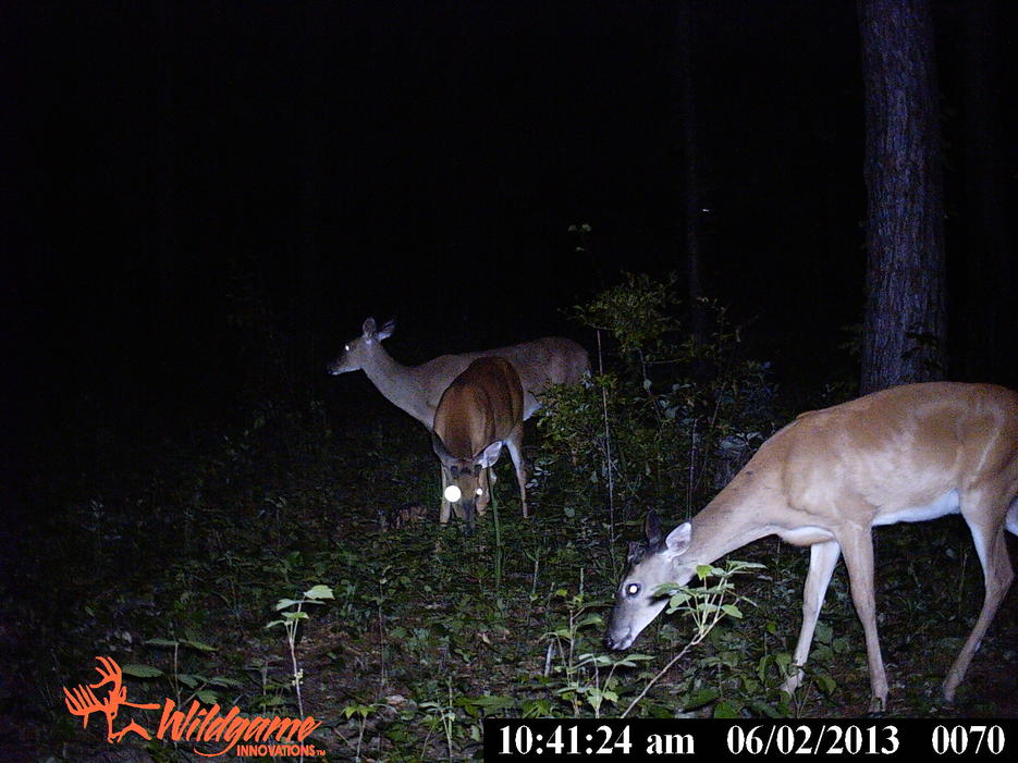 trail cam pics from Ga-pict0233.jpg