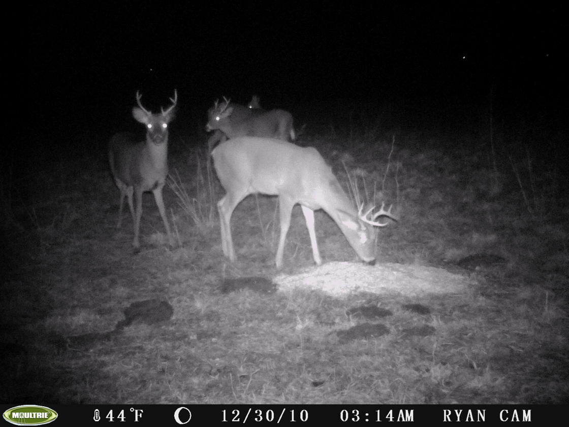 Post-Season Buck Pics....-pict0259.jpg