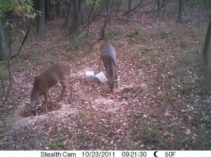 Game camera and spooking deer-pict0313-1-.jpg