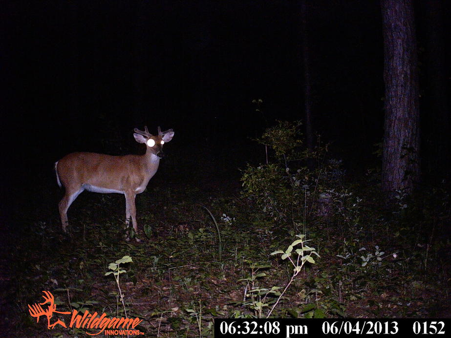 trail cam pics from Ga-pict0315.jpg