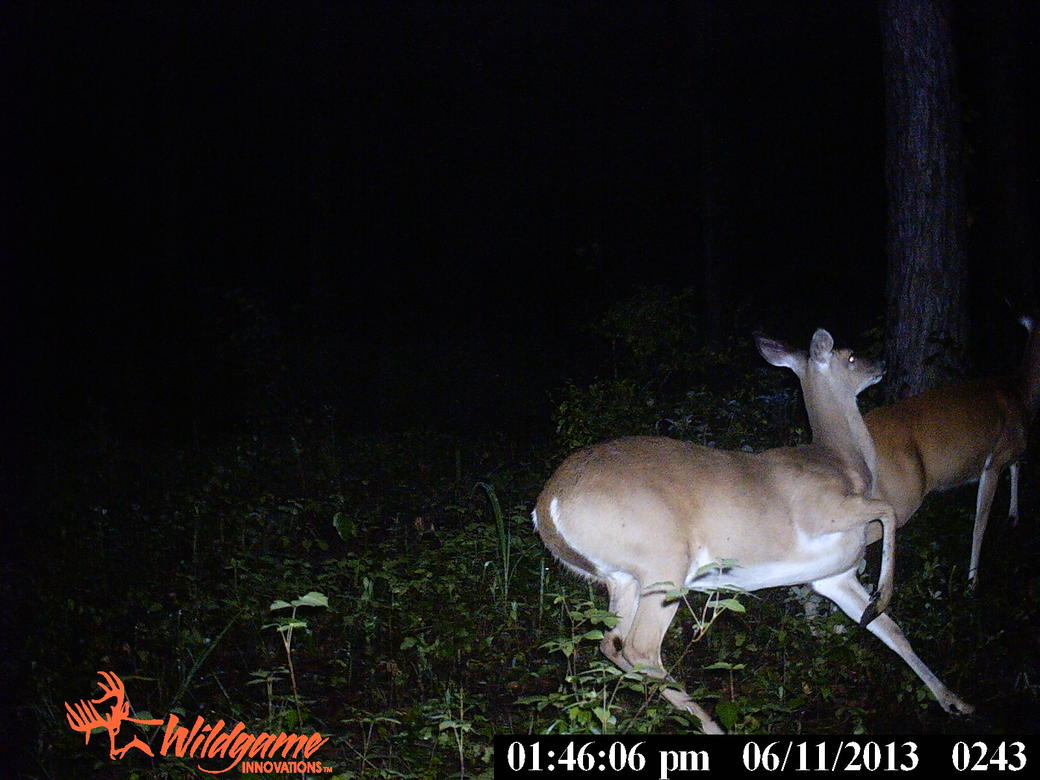 trail cam pics from Ga-pict0406.jpg