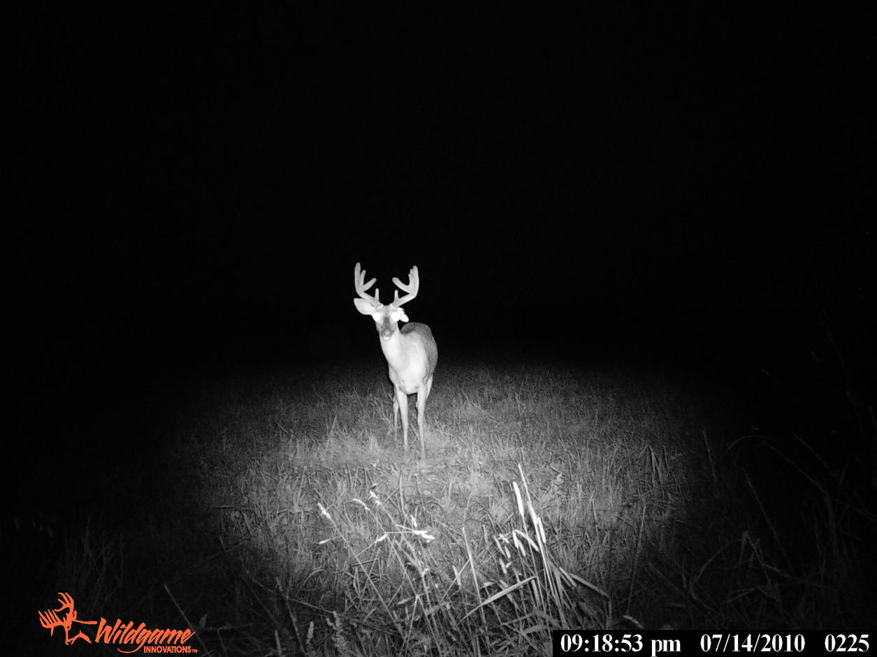 Can U guess what's wrong w/this buck?-pict0496.jpg