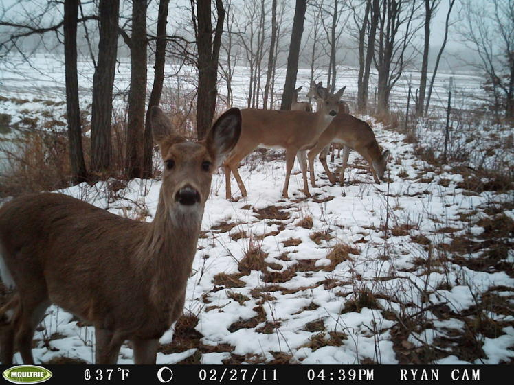 Official Thread 2011 Trail Cam Pic Contest ( cash)-pict0537.jpg