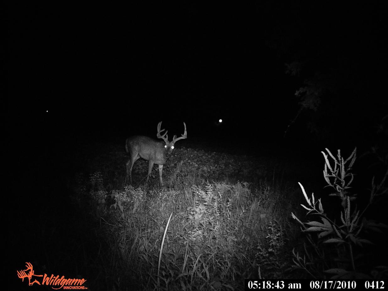 Nice bucks!!!-pict0642.jpg