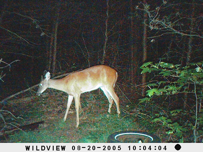 trail cam pics-picture-002.jpg